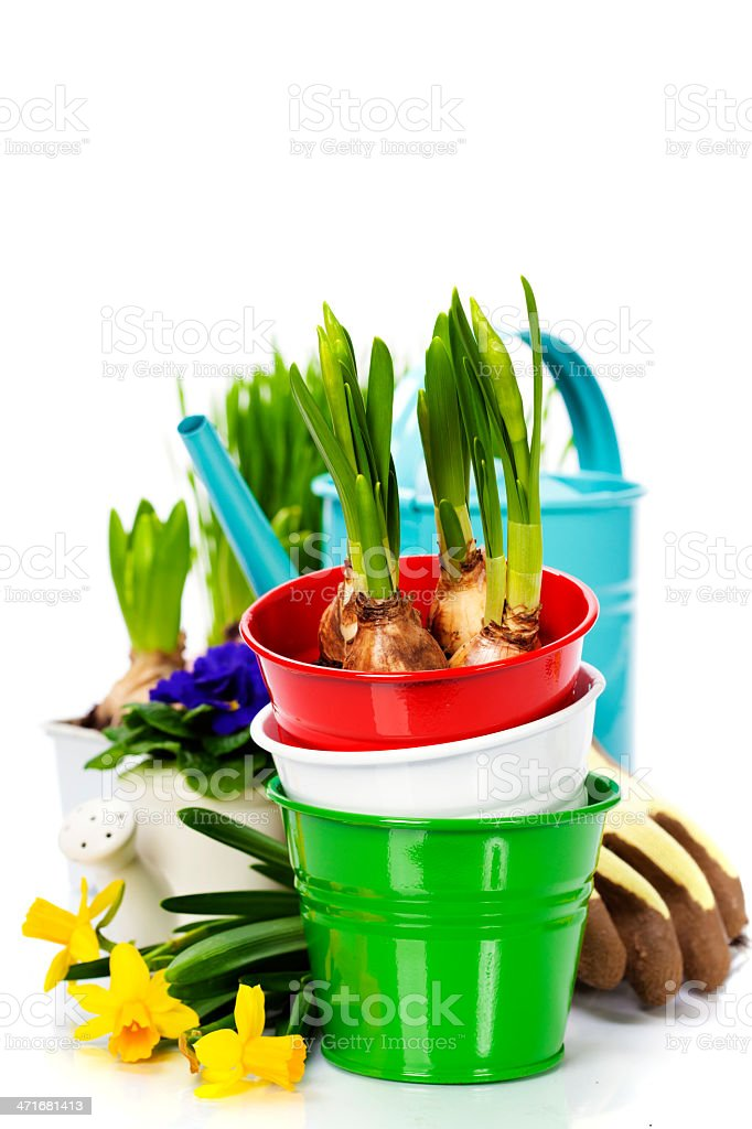 Spring flowers and garden tools royalty-free stock photo