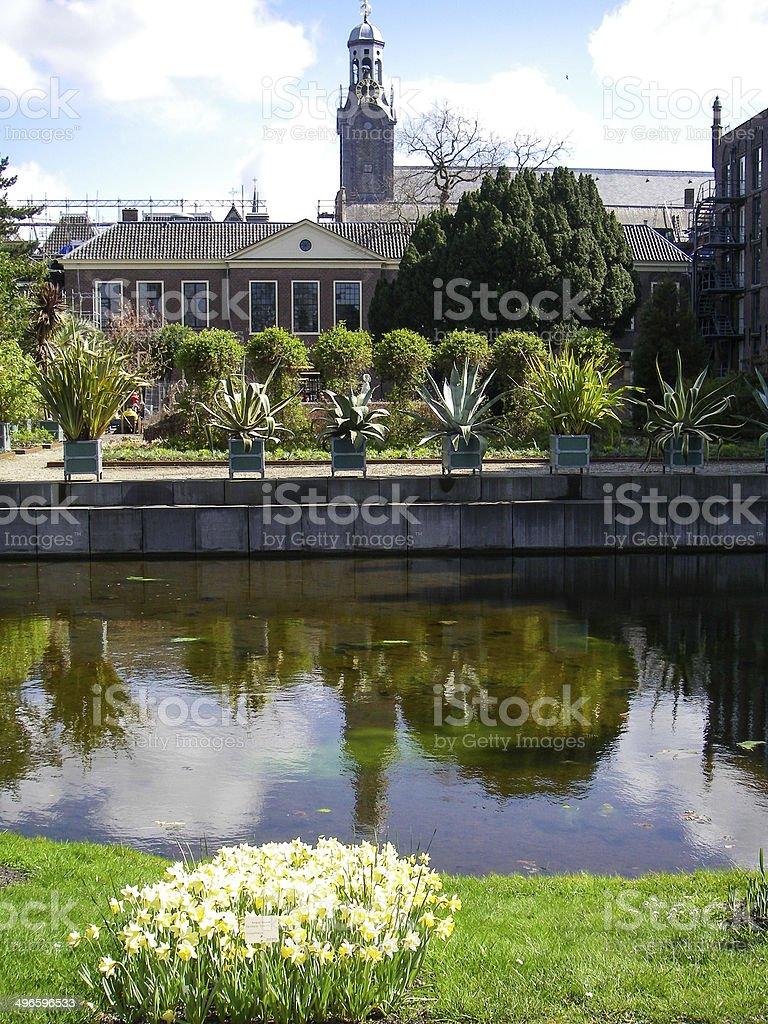 Spring Flowers and Interior Courtyard Arboretum Leiden Netherlands stock photo