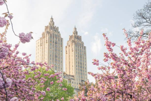 spring flowers and landmark art deco architecture in nyc - central park manhattan zdjęcia i obrazy z banku zdjęć