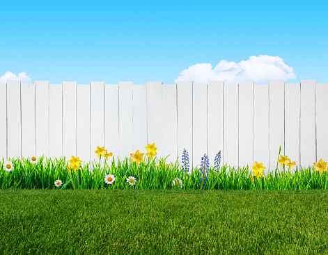 Spring Flowers And Wooden Garden Fence Stock Photo Download