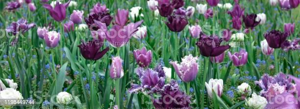 Spring flowers background picture id1198449744?b=1&k=6&m=1198449744&s=612x612&h=kmvkweftief6y 3lqltxmjx7ecri epumnu5wib5ozo=