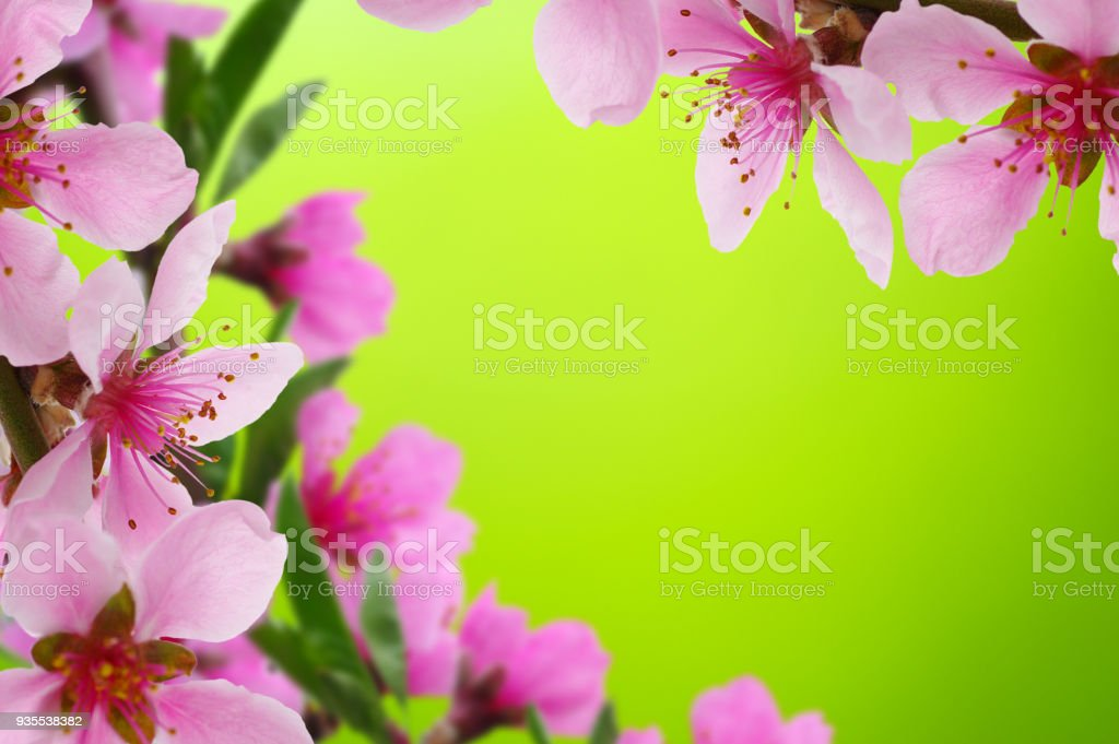 Spring flowers background stock photo more pictures of apple spring flowers background royalty free stock photo mightylinksfo