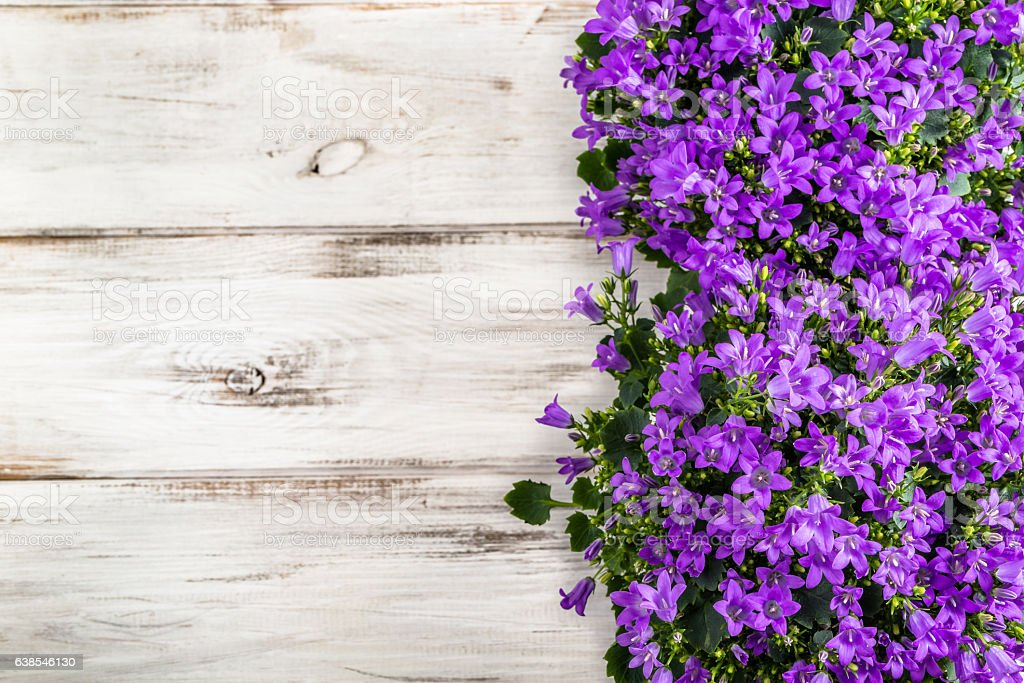 Spring flowers background with copy space. stock photo