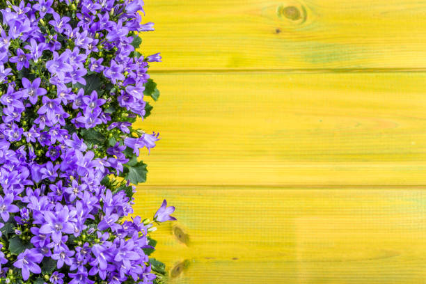Spring flowers background with copy space. Spring flowers background with copy space. bluebell stock pictures, royalty-free photos & images