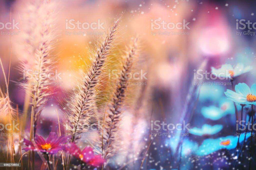 Frühling Blumen Blüte  – Foto