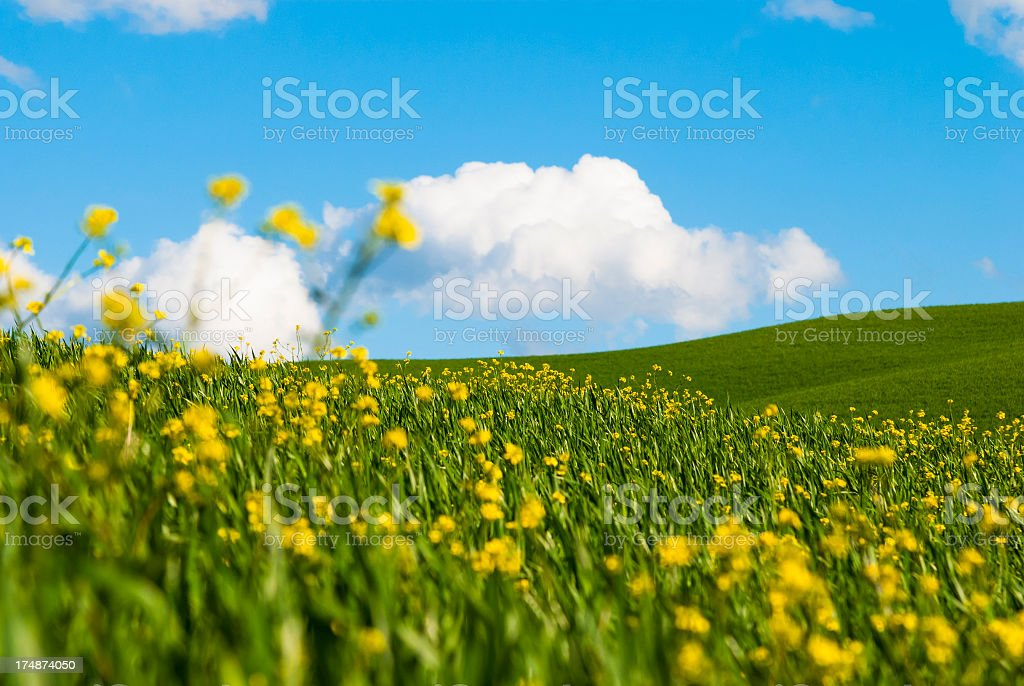 Spring flowers close up royalty-free stock photo