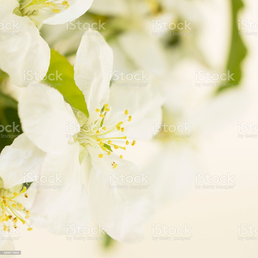Spring Flowers Close Up stock photo