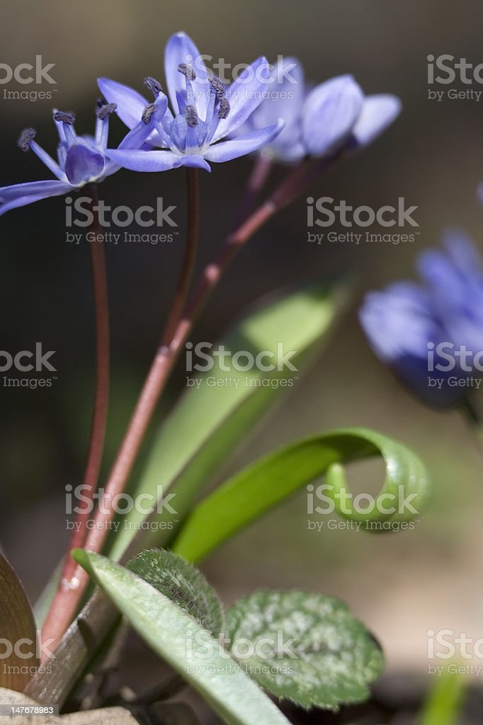 Spring Flowers close-up stock photo