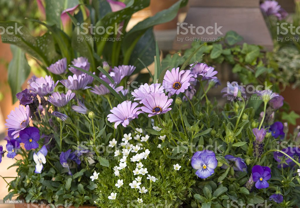 Potted spring flower plants brighten up a shady patio garden.