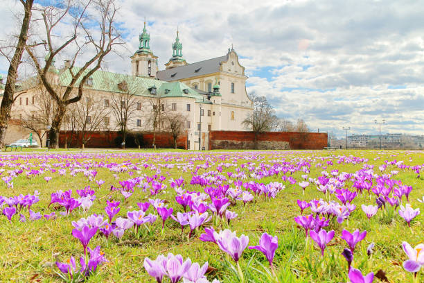 Spring flowers - crocuses in front of a church on a rock.