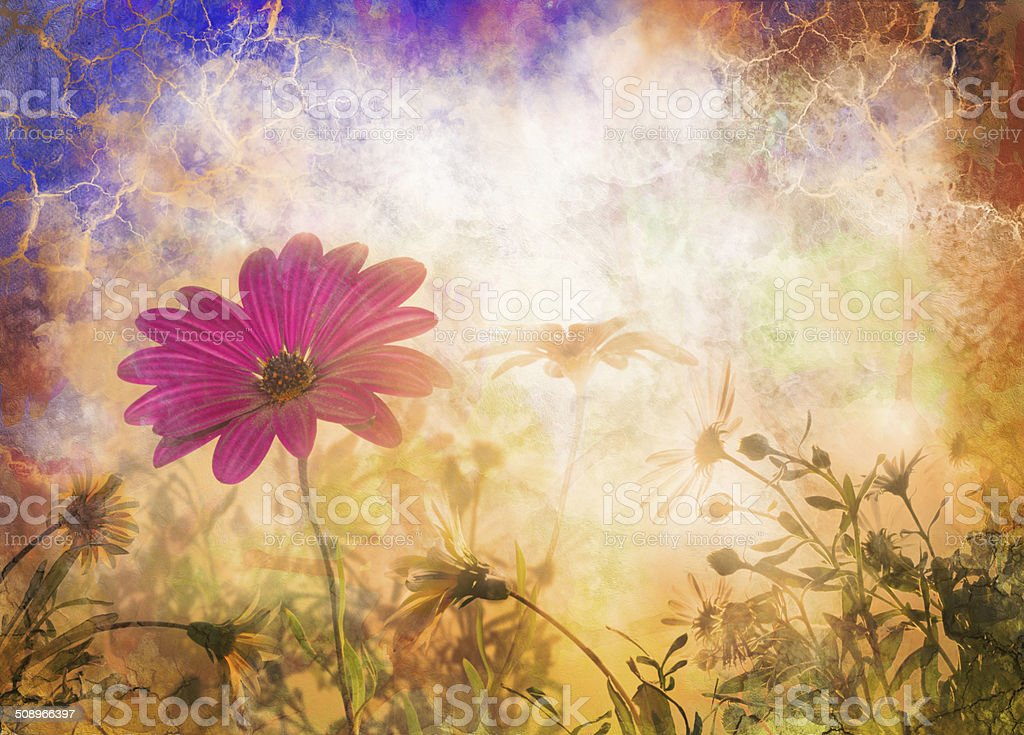 spring flowers, Daisy at sunrise stock photo