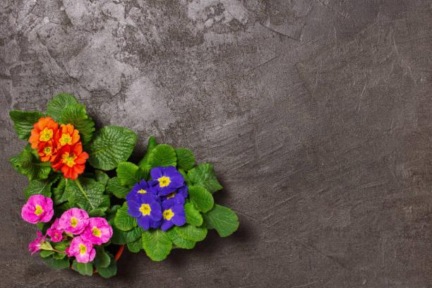 Spring flowers for planting on the grey table picture id1130652630?b=1&k=6&m=1130652630&s=612x612&w=0&h=jr85o9mpph1jo6lcgj3wruhcshe1vnevyvvadvt36ug=