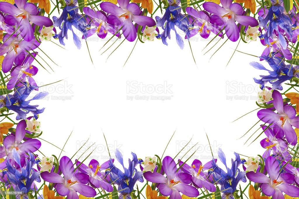 Spring flowers frame. royalty-free stock photo