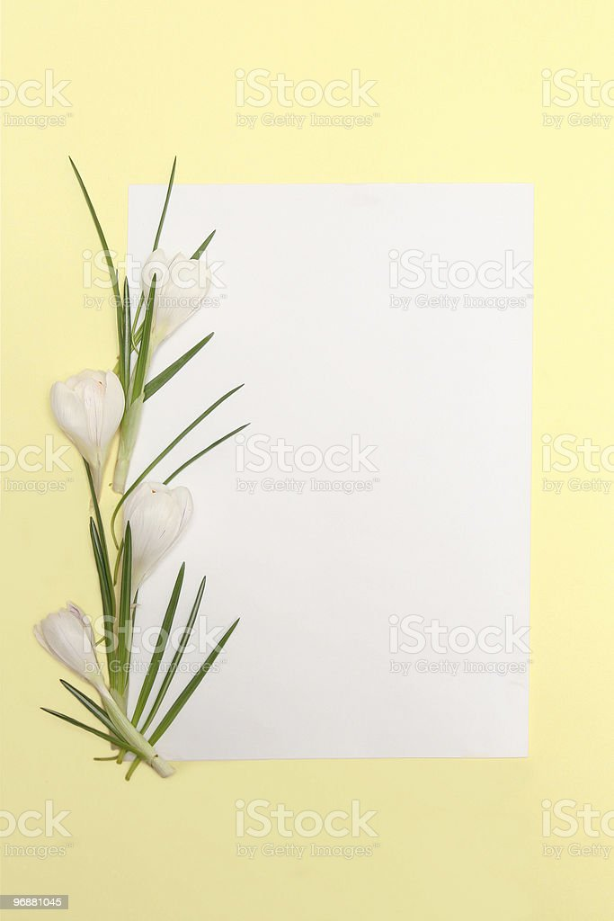 Spring flowers frame royalty-free stock photo