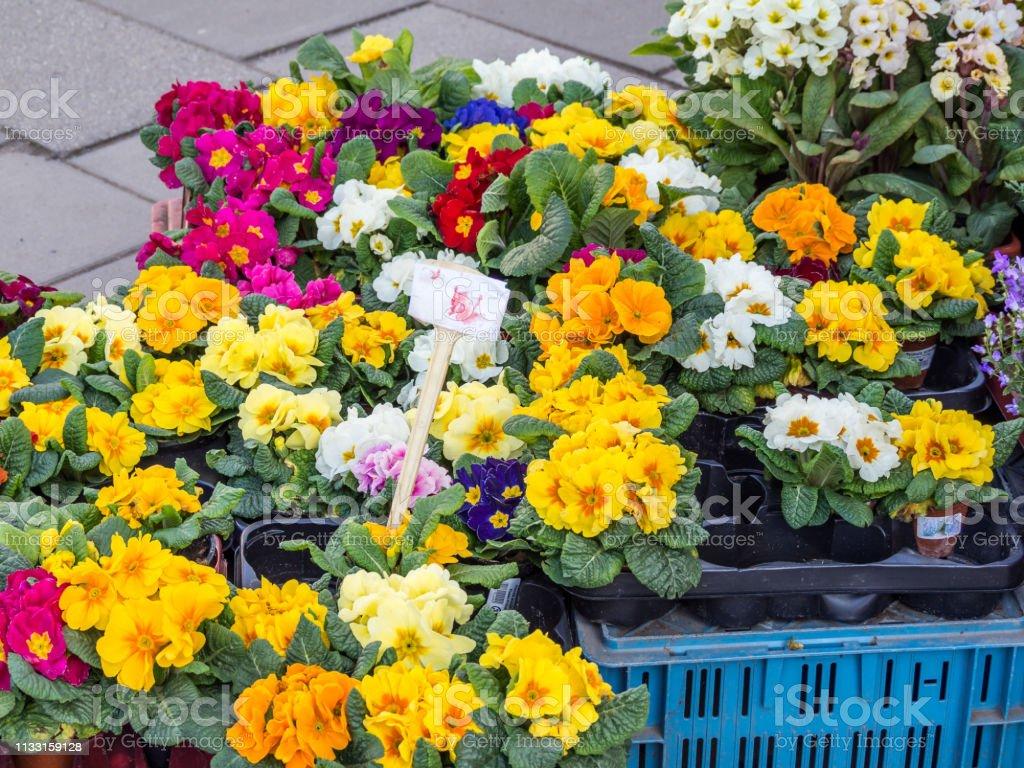 Spring Flowers Garden Weekly Market Stock Photo Download Image