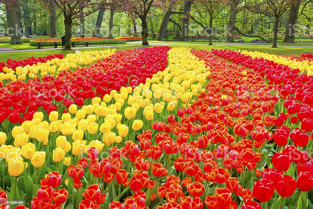 Spring Flowers in a Park royalty-free stock photo