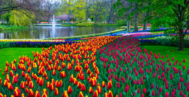 Spring Flowers in a park. stock photo