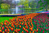 Colorful tulips along a pond in a park. Location is Keukenhof Gardens, Netherlands