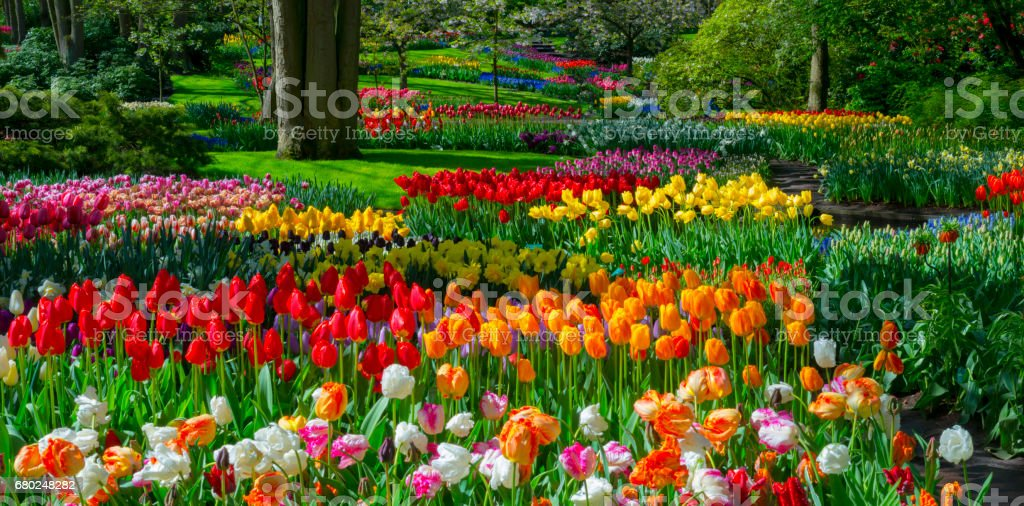 Frühlingsblumen in einem Park. – Foto