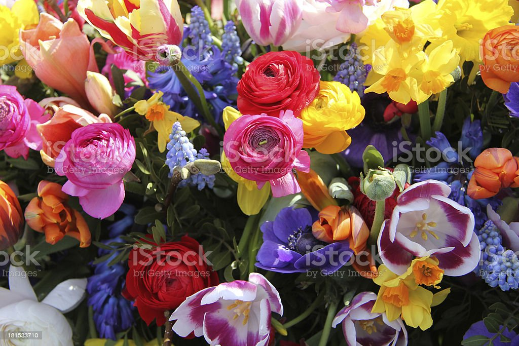 Spring flowers in bright colors royalty-free stock photo