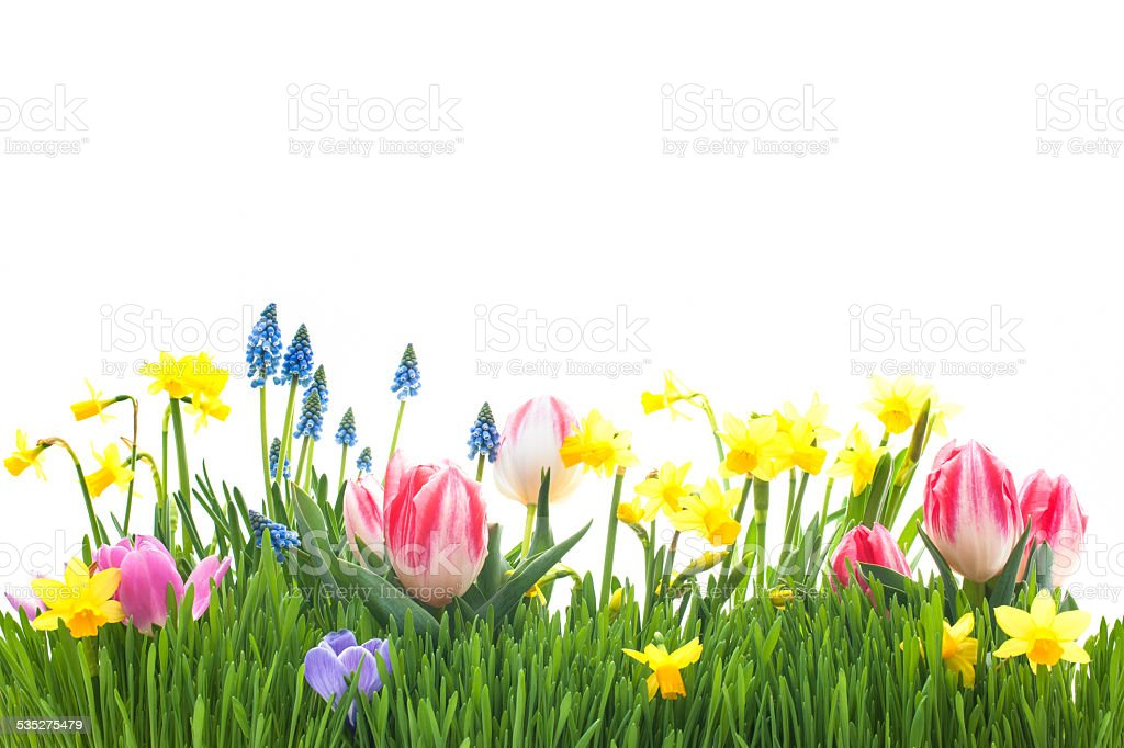 Spring flowers in green grass stock photo