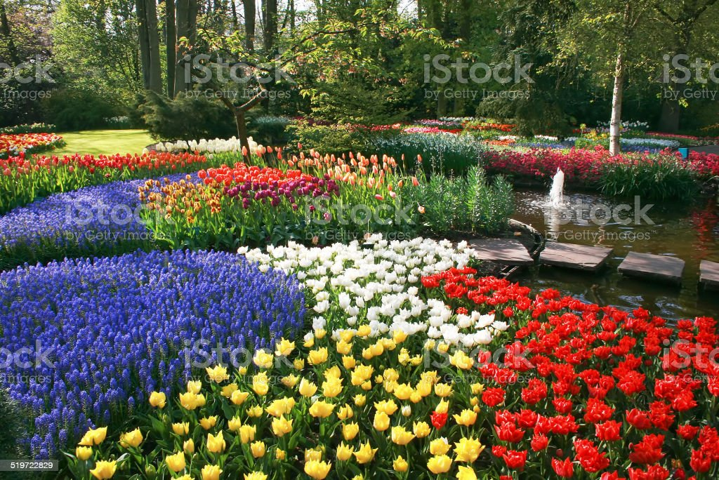Spring flowers in park stock photo