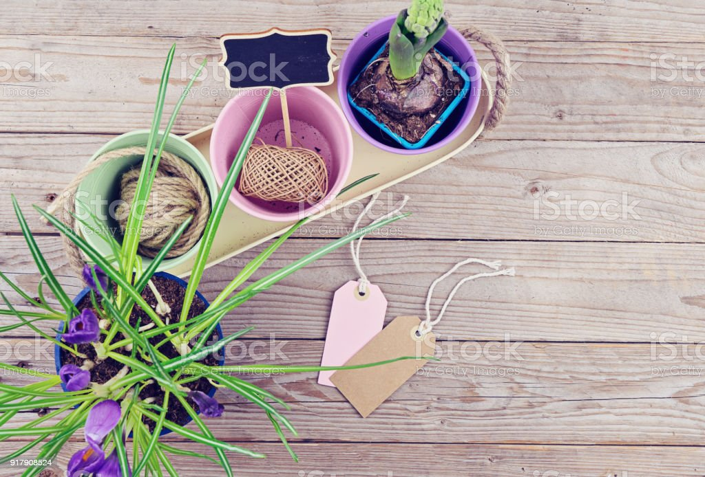 Spring flowers in pots on the wooden background stock photo