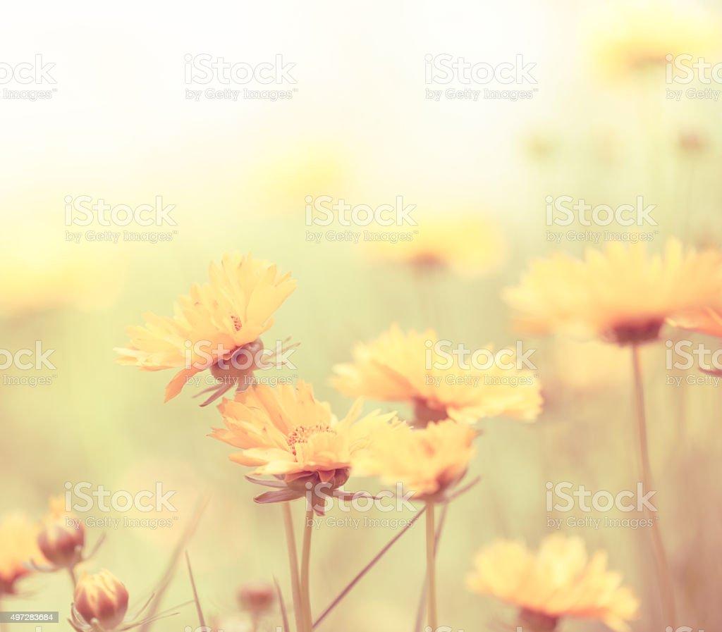 Fleurs de printemps dans la Prairie - Photo