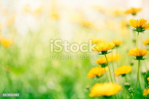 Spring flowers in the meadow