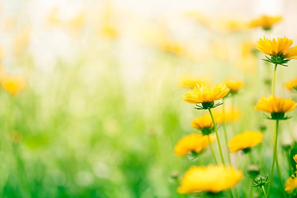 frühling blumen in the meadow - sommerblumen stock-fotos und bilder