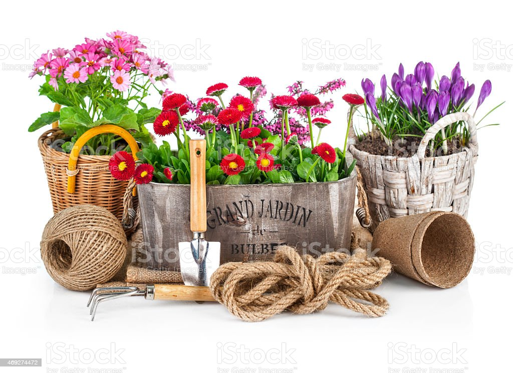 Spring flowers in wooden bucket with garden tools stock photo