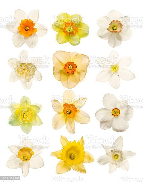 Spring flowers isolated on white picture id471129933?b=1&k=6&m=471129933&s=612x612&h=jf smnaapwails fvpfyvbqxb9sq7e6xl0607p9dmzk=