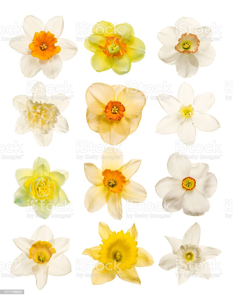 Spring Flowers isolated on white stock photo