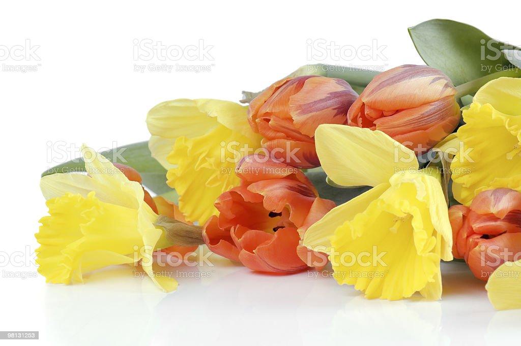 Primavera fiori, isolato su bianco foto stock royalty-free