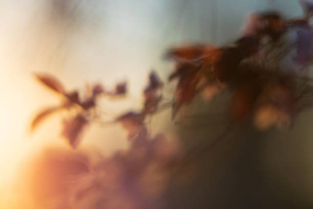Spring flowers nature abstract background. stock photo