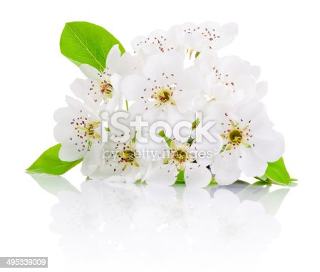 istock Spring flowers of fruit trees isolated on white background 495339009