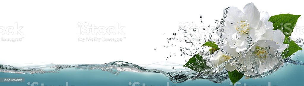 Spring flowers of jasmine in a spray of cool water. stock photo