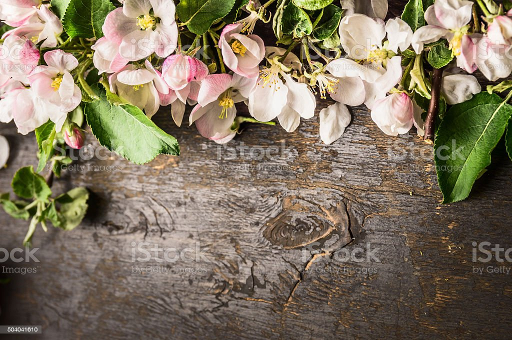 Spring flowers of trees on dark wooden background, top view stock photo