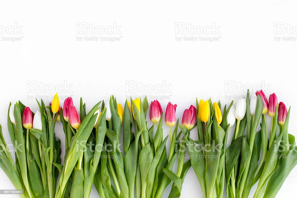 Spring Flowers On A Snow Background Stock Fotografie Und Mehr Bilder