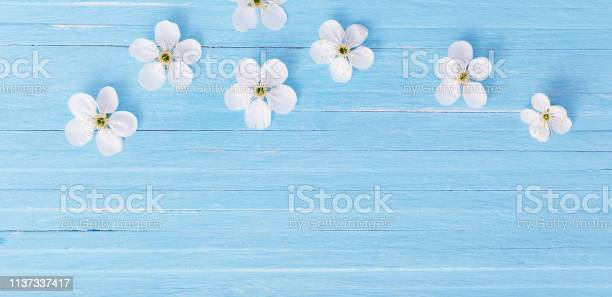 Spring flowers on blue wooden background picture id1137337417?b=1&k=6&m=1137337417&s=612x612&h=jk9t9h1kkdmyicwnbhznjz3lpjztm6xirmw5t1zol5w=