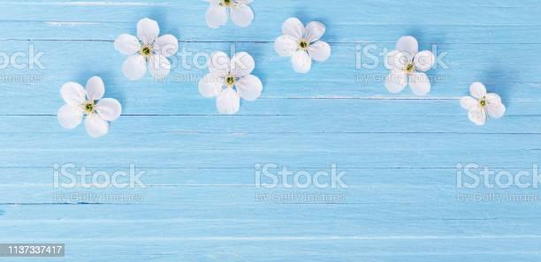 Spring flowers on blue wooden background picture id1137337417?b=1&k=6&m=1137337417&s=612x612&h=jk9t9h1kkdmyicwnbhznjz3lpjztm6xirmw5t1zol5w=