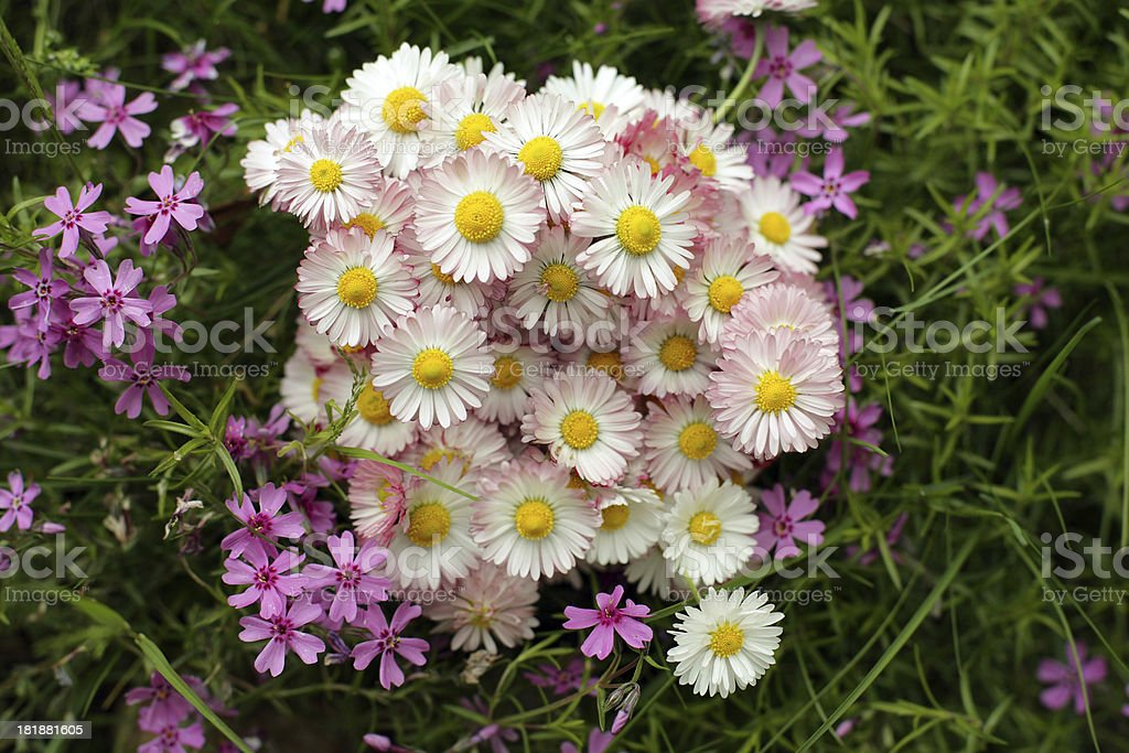 Spring Flowers on the grass royalty-free stock photo