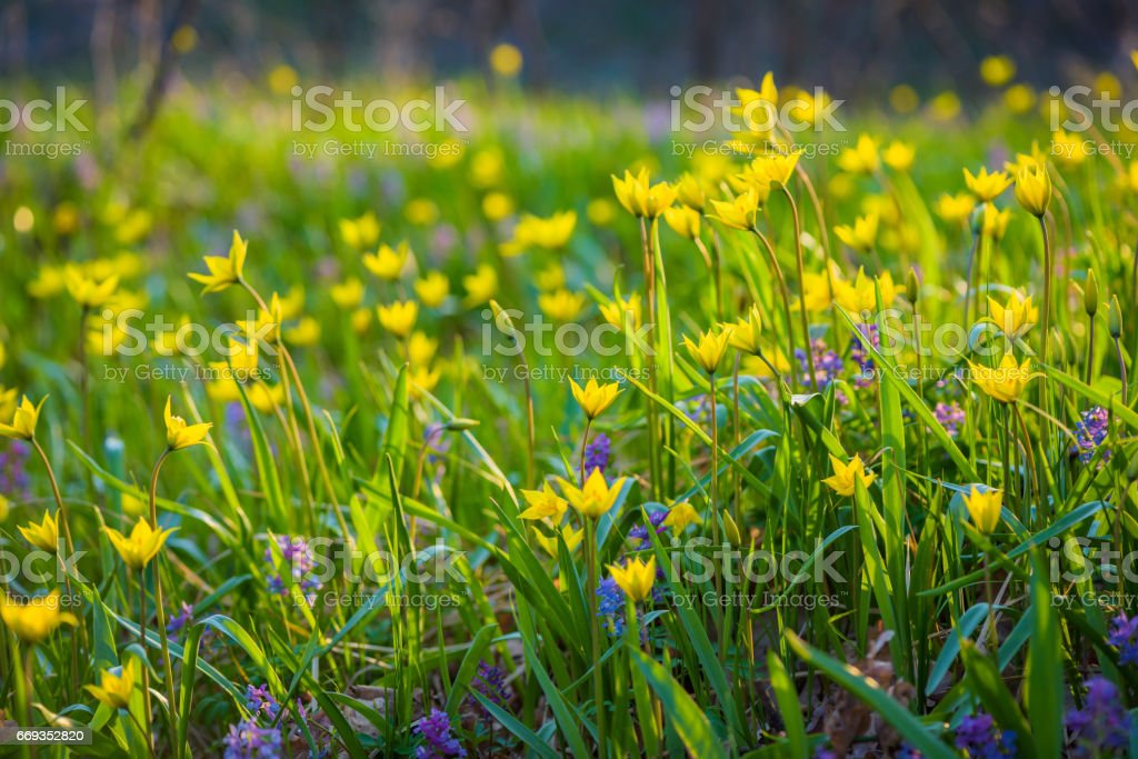 Spring flowers on the meadow. stock photo