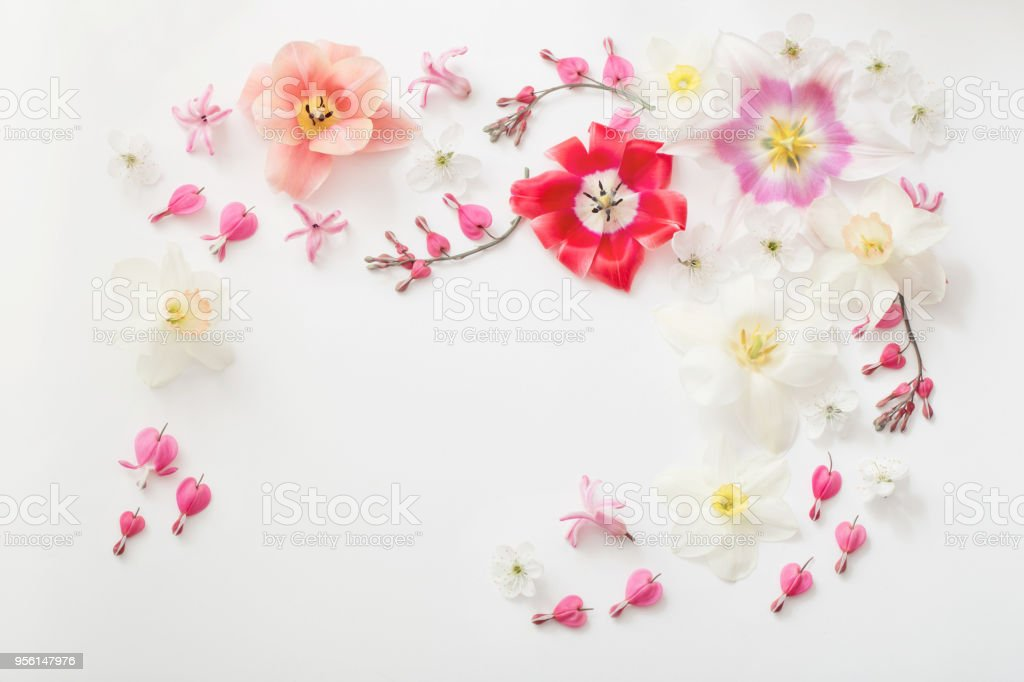 spring flowers on white background stock photo