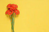Spring flowers. Orange gerbera flowers bouquet isolated on yellow background. Flat lay, top view. Minimal floral concept. Floral background. Add your text.