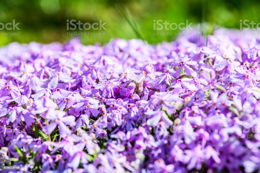 spring flowers - outdoor activity and spring season 免版稅 stock photo