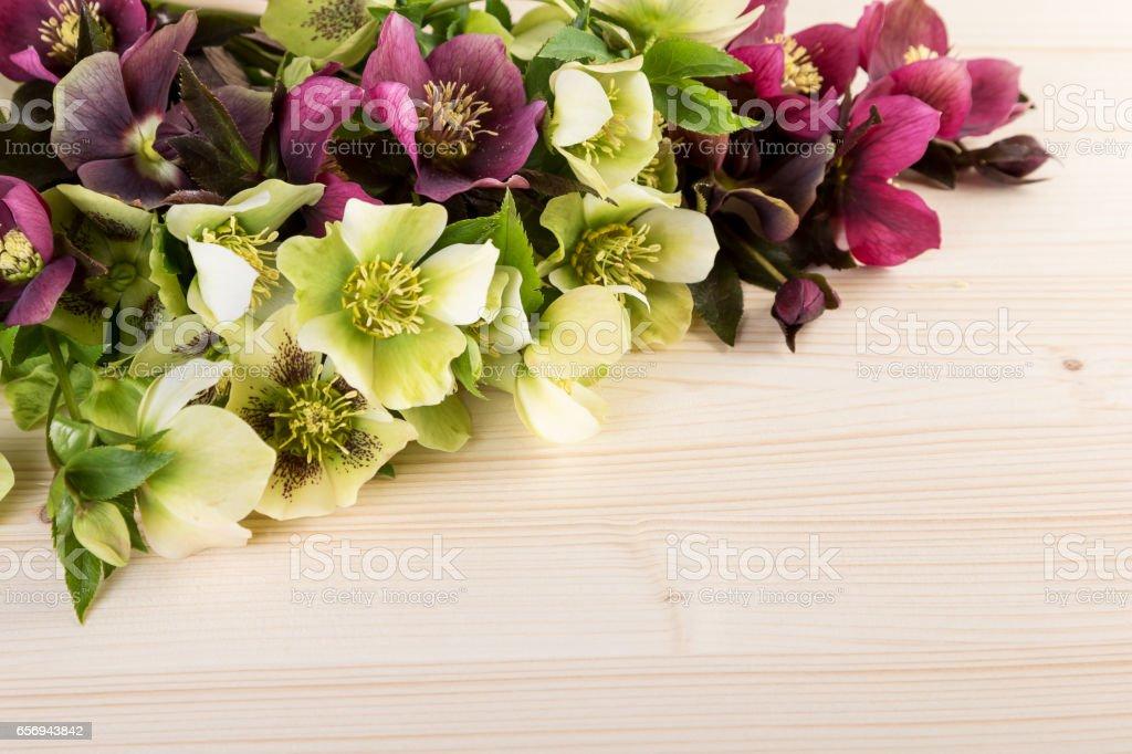 Spring flowers pastel color background. Lenten roses on light wood stock photo