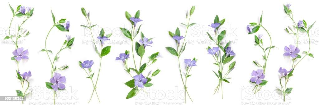 Весенние цветы Перивинкл - Стоковые фото Барвинок - цветок роялти-фри