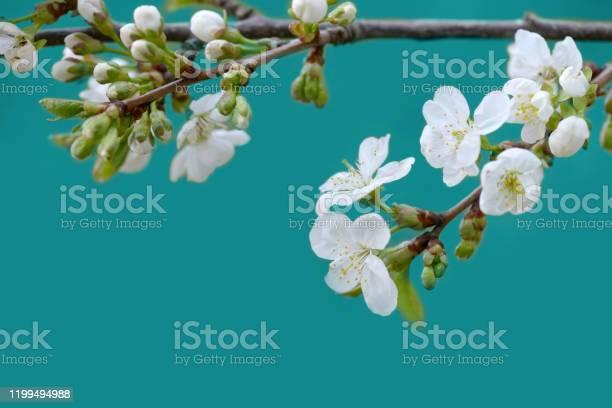 Spring flowers picture id1199494988?b=1&k=6&m=1199494988&s=612x612&h=0phmjxwapudeacnjnjixdly53ky 3tk08dm td82vda=