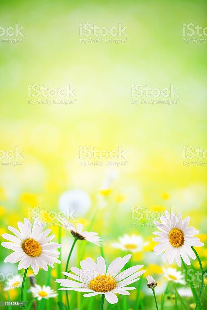 Fleurs de printemps - Photo